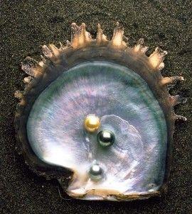 perles de tahiti et nacre